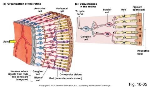 retina-layout
